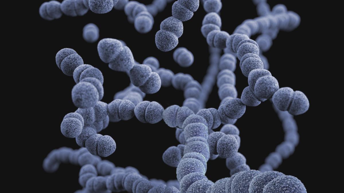 Las bacterias de nuestra boca?